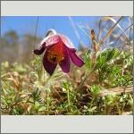 Bild 191 zum Bildarchiv Sonstige Blüten
