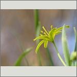 Bild 192 zum Bildarchiv Sonstige Blüten