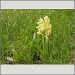 Bild 15 zum Bildarchiv Blüten Orchideen