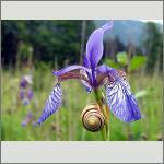 Bild 163 zum Bildarchiv Sonstige Blüten