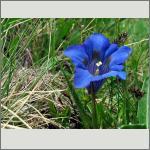 Bild 166 zum Bildarchiv Sonstige Blüten
