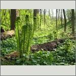 Bild 77 zum Bildarchiv Sonstige Pflanzen