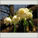 Bild 134 zum Bildarchiv Sonstige Blüten