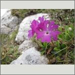 Bild 140 zum Bildarchiv Sonstige Blüten