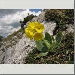 Bild 124 zum Bildarchiv Sonstige Blüten