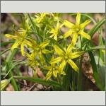 Bild 128 zum Bildarchiv Sonstige Blüten
