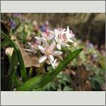 Bild 143 zum Bildarchiv Sonstige Blüten