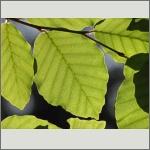 Bild 74 zum Bildarchiv Sonstige Pflanzen