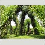 Bild 61 zum Bildarchiv Sonstige Pflanzen