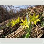 Bild 113 zum Bildarchiv Sonstige Blüten