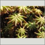 Bild 36 zum Bildarchiv Früchte/Samen