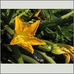 Bild 129 zum Bildarchiv Sonstige Blüten