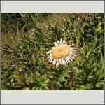 Bild 27 zum Bildarchiv Früchte/Samen