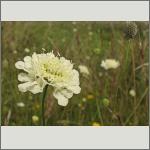 Bild 120 zum Bildarchiv Sonstige Blüten
