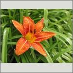 Bild 123 zum Bildarchiv Sonstige Blüten