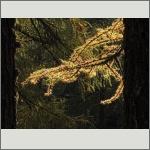 Bild 64 zum Bildarchiv Sonstige Pflanzen