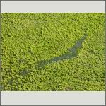 Bild 60 zum Bildarchiv Sonstige Pflanzen