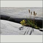 Bild 85 zum Bildarchiv Sonstige Blüten