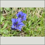Bild 105 zum Bildarchiv Sonstige Blüten