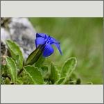 Bild 93 zum Bildarchiv Sonstige Blüten