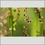 Bild 97 zum Bildarchiv Sonstige Blüten