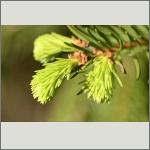 Bild 56 zum Bildarchiv Sonstige Pflanzen