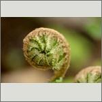 Bild 57 zum Bildarchiv Sonstige Pflanzen