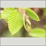 Bild 58 zum Bildarchiv Sonstige Pflanzen