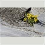 Bild 101 zum Bildarchiv Sonstige Blüten