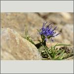 Bild 99 zum Bildarchiv Sonstige Blüten