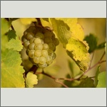 Bild 18 zum Bildarchiv Früchte/Samen