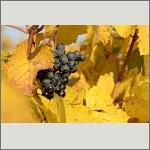 Bild 22 zum Bildarchiv Früchte/Samen