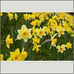 Bild 91 zum Bildarchiv Sonstige Blüten