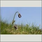 Bild 92 zum Bildarchiv Sonstige Blüten