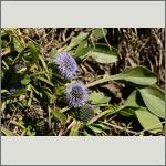 Bild 76 zum Bildarchiv Sonstige Blüten