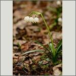 Bild 80 zum Bildarchiv Sonstige Blüten