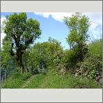 Bild 160 zum Bildarchiv Landschaft