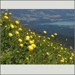 Bild 166 zum Bildarchiv Landschaft