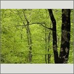Bild 168 zum Bildarchiv Landschaft