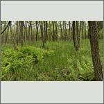 Bild 23 zum Bildarchiv Landschaft I