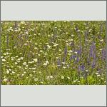 Bild 6 zum Bildarchiv Landschaft I