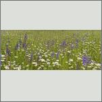Bild 1 zum Bildarchiv Landschaft I