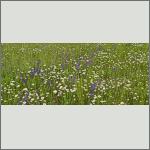 Bild 4 zum Bildarchiv Landschaft I