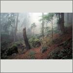 Bild 58 zum Bildarchiv Landschaft II