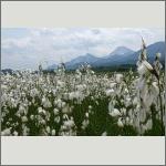Bild 130 zum Bildarchiv Landschaft