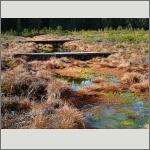 Bild 25 zum Bildarchiv Landschaft II