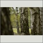 Bild 57 zum Bildarchiv Landschaft