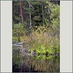 Bild 58 zum Bildarchiv Landschaft