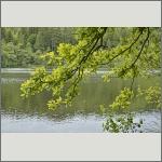 Bild 79 zum Bildarchiv Landschaft