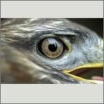 Bild 31 zum Bildarchiv Augen